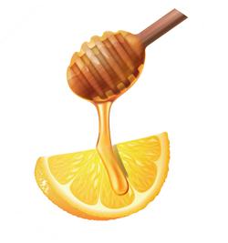 lemon-illust
